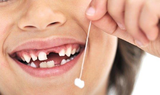 Многократная смена зубов – древняя черта, свойственная низшим позвоночным,