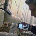 Как отучить собаку храпеть (видео)