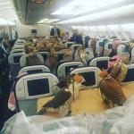 Интернет-пользователей заинтересовала фотография 80 соколов саудовского принца, летящих на самолете