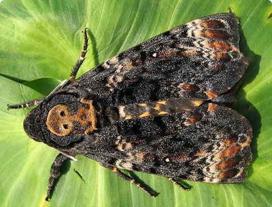На сегодняшний день известно около 1 млн. видов насекомых. Из них порядка 10 тыс. способны производить различные звуки.