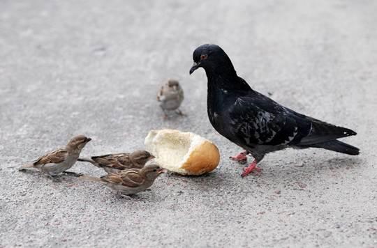Способ передвижения по земле отчасти зависит от размера птицы
