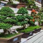 Какое самое низкое дерево в мире?