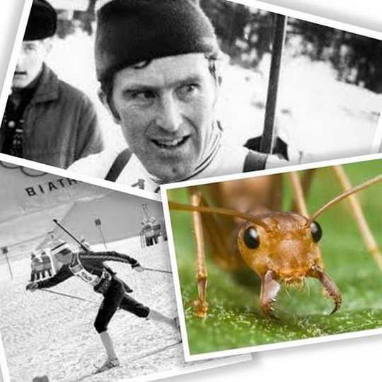Норвежский биатлонист Магнар Сольберг отрабатывал в летнее время стрельбу, лёжа на муравейнике.