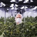 Производитель марихуаны купил город в США