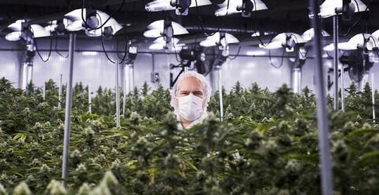 Американская компания American Green, которая выращивает коноплю и производит продукты на основе марихуаны, приобрела в Калифорнии целый город