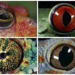 Каким животным третий глаз помогает ориентироваться в пространстве?