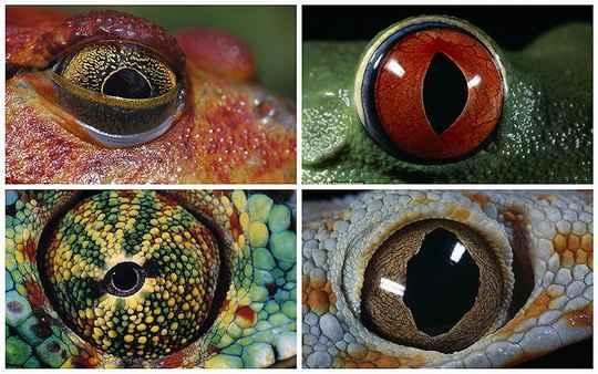 Третий глаз, или теменной глаз, — это распространённый светочувствительный орган у некоторых бесчелюстных, рыб, земноводных и рептилий