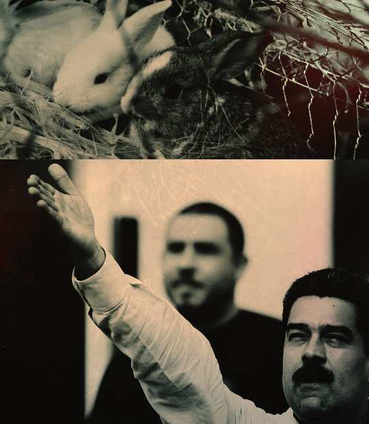 """Президент Венесуэлы Николас Мадуро разработал так называемый """"план кроликов"""" для противостояния экономической войне, которая, по его мнению, была развязана против государства империалистами."""