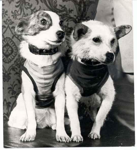 Космические собаки Белка и Стрелка получили эти имена только за шесть дней до полёта.