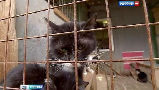 Законопроект устанавливает, что за жестокое обращение с животными, повлекшее их гибель или увечье, если ...