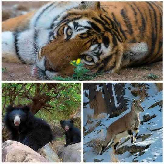 Фотограф и зоолог Аксель Гомиль исследует Индию в течение последних 25 лет.