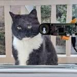 Голландский разработчик создал систему распознавания морды кота