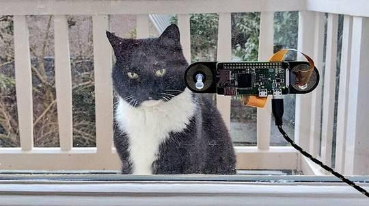 Программист из Нидерландов Аркайц Гарро разработал систему распознавания морды кота