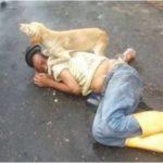 Пёс не дал в обиду своего пьяного хозяина