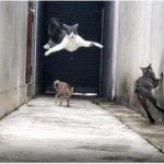 Ловкая кошка виртуозно ушла от своих обидчиков
