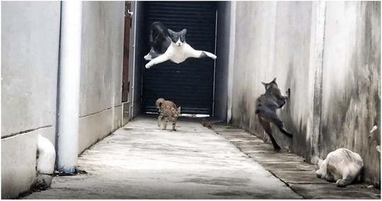 Короткометражный боевик с участием кошек запечатлел житель Таиланда.