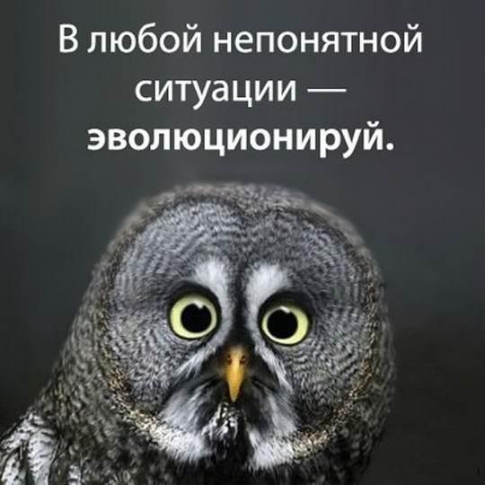 «В любой непонятной ситуации» — мем