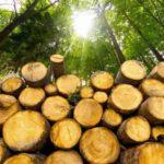 Из каких деревьев делают бумагу?