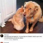 Смешные комментарии из соц. сетей, высказывания, смешные картинки (*мат) ч.12