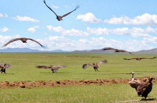 Долгое время в Монголии люди оставляли своих мертвецов разлагаться на открытом воздухе.