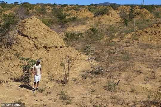 Огромный «мегаполис из 200 огромных термитников тысячи лет скрывался в сухих лесах – каатинге.