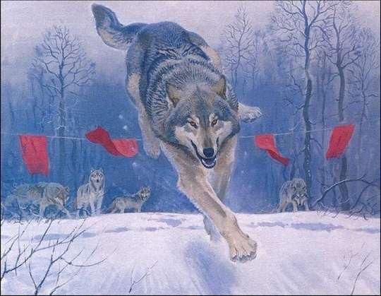 Волк – хищное и опасное создание.