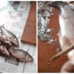 Изобретательный способ почистить рыбу от чешуи