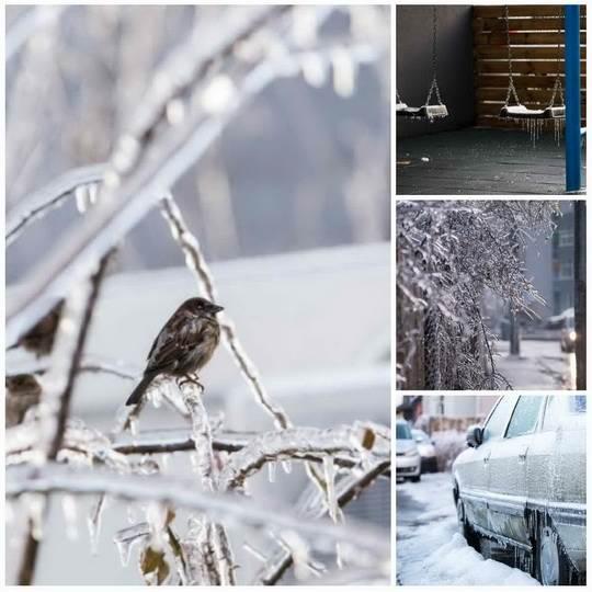 Зима этого года принесла в Румынию ледяные дожди, это редкое явление, создающее ледяной покров на всем, чего коснулись капли воды.