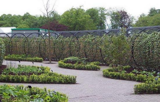 Ядовитый сад, Алник.