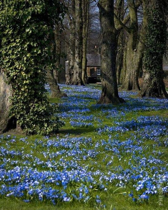 Alnwick Gardens, Великобритания.