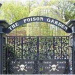 Ядовитый сад в Великобритании привлекает туристов