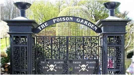 Сад Alnwick Garden был посажен в замке Алник в Нортумберленде, Англия, в 1750 году по приказу 1-го герцога Нортумберленда