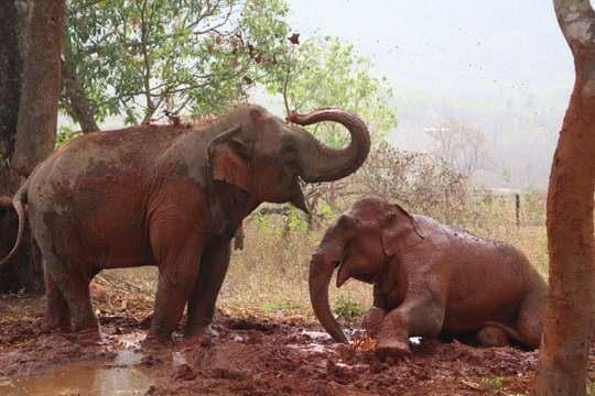 Что делать со старыми слонами-лесорубами? В Мьянме создали настоящие дома престарелых для слонов.