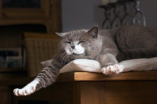 Во сне интенсивность кровотока уменьшается, поскольку расслабленные мышцы потребляют мало кислорода