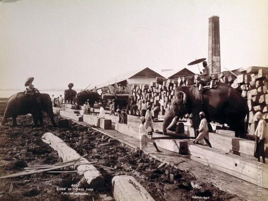Склад древесины в Рангуне, Бирма (Мьянма), около 1890 года.