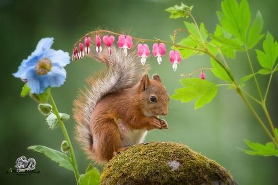 Шведско-голландский фотограф Гирт Вегген посвятил свою жизнь и работу съемке живой природы.