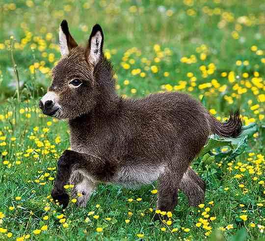 Оба слова означают животное, принадлежащее к виду Equus asinus.