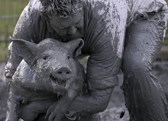 Каждый август в канадской провинции Квебек собираются более 40 000 человек на настоящий свинский фестиваль Du Cochon.