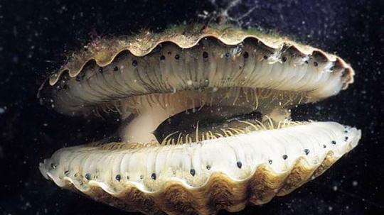 Если называть зубом любое твердое образование, расположенное во рту и служащее для измельчения пищи, то рекордсменами оказываются брюхоногие моллюски.