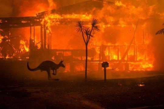 Почти полмиллиарда животных погибли в лесных пожарах Австралии, вероятно, уничтожены целые виды