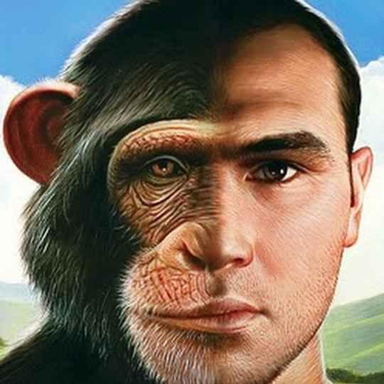 Человек генетически ближе всего к шимпанзе: в зависимости от метода подсчёта, схожесть наших геномов составляет от 94% до 98%.