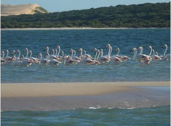 На острове Бенгуэрра обитают многие представители дикой природы, включая фламинго, дельфинов и черепах. На курорте Кисава есть дайвинг-центр, где гости могут заняться морским сафари