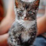 Почему кошки топчутся на месте?