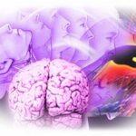 Когнитивизм— что это такое?