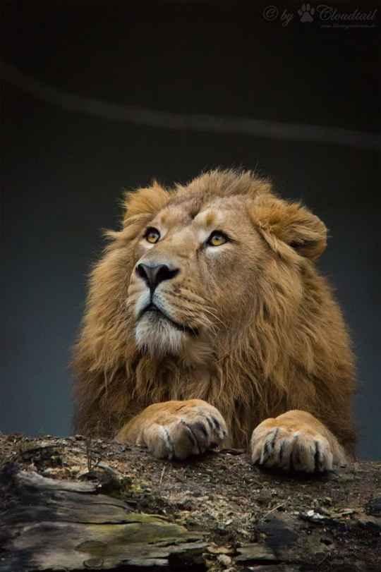 Жизнь самых интересных животных из разных уголков мира.