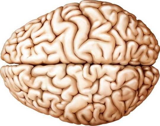 При полном отсутствии мозга (ацефалии) плод рождается мертвым.