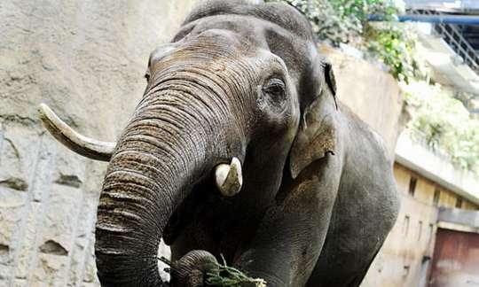 В карагандинском зоопарке с 1973 по 1993 годы жил слон Батыр, умевший подражать человеческой речи