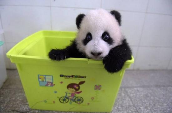pandy-