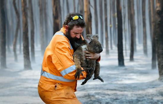 В первых числах января значительно усилились лесные пожары в Австралии