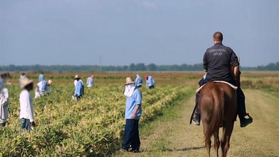 Заключенные (рабы) на плантациях, под присмотром надзирателя, наши дни, США.